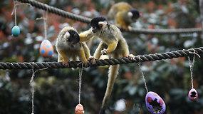 Londono zoologijos sodo gyventojai švenčia Velykas