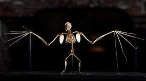 Mokslininkai išsiaiškino, kad šikšnosparniai egzistavo jau prieš 33 mln. metų