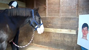 Gyvūnų psichologija: žirgai supranta ir vertina žmonių emocijas