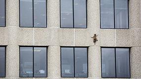 Dangoraižio stogą pasiekęs meškėnas tapo internetine sensacija