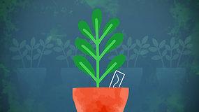 """""""Sodas balkone"""": ką svabu žinoti apie augalų pikavimą ir kaip išvengti didžiausių klaidų persodinant"""