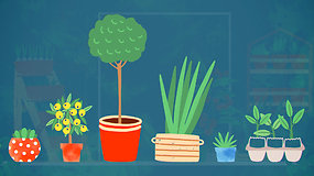 """""""Sodas balkone"""": išvažiuojate savaitgaliui? Patarimai, kaip sugrįžus nesigriebti už galvos dėl perdžiūvusių augalų"""