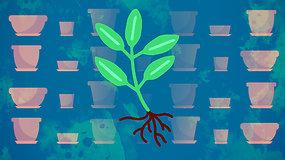 """""""Sodas balkone"""": gėlės ir pomidorai viename vazone? – viskas įmanoma, kai augini tinkamai"""