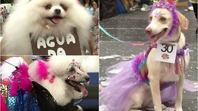 Rio de Žaneire linksminosi šunys: tarp karnavalo personažų –  Snieguolės, drugeliai, ir netgi dešrainiai