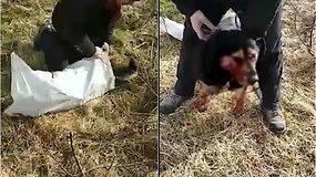 Vilniuje žiauriai sumuštas šuo