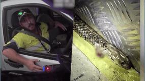 To patirti nesitikėjo: važiuodamas greitkeliu, nustėro iš baimės – į tarpkojį kirsti kėsinosi nuodinga gyvatė