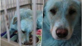 Prie apleistos chemijos gamyklos Rusijoje rasti mėlyni šunys