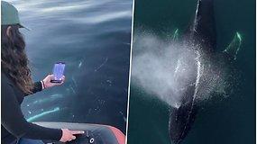 Didžiulis, draugiškai nusiteikęs banginis plaukė visai šalia valties – keleiviai nufilmavo neįtikėtinų vaizdų