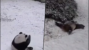 Žaismingai nusiteikusi panda nepraleido progos pasilinksminti: riedėjo ir čiuožė nuo apledėjusio kalniuko