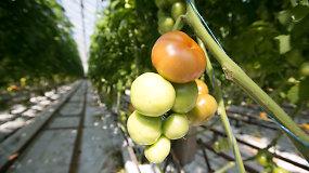 Lietuviškos daržovės: kaip jos auginamos?