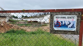 Užgožė koronavirusas: Molėtuose dėl afrikinio kiaulių marų nugaišinta 9 tūkst. kiaulių – teko dusinti