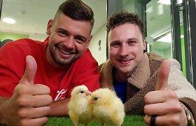 """Radijo stoties studijoje išsirito viščiukai: """"gimdyme"""" dalyvavę ZIP FM vyrai neslepia emocijų"""