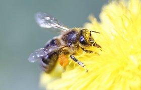 Lietuvoje apsilankęs BBC žurnalistas britams papasakojo apie lietuvių meilę žalčiams ir bitėms
