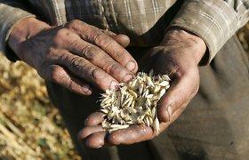 Lietuva iš rekordinio javų derliaus eksporto uždirbs milijardus
