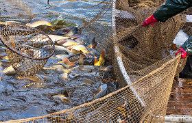 Naujoji Vyriausybė ketina drausti verslinę žvejybą