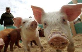 Kalvarijų savivaldybė nepritarė kiaulių auginimui