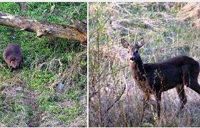 Gyvūnų mylėtojas iš Kėdainių fiksuoja nuostabius gamtos vaizdus
