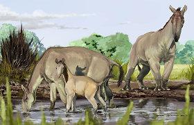 """Darwino """"keisčiausias gyvūnas"""" rado šeimą"""