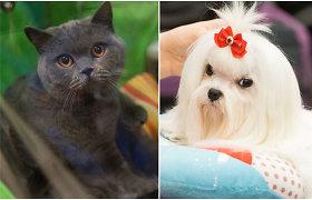 Sostinėje vykstančioje šunų ir kačių parodoje – apie 2000 augintinių