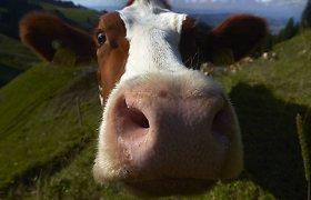 Молочная отрасль обеспокоена отменой закупочных квот