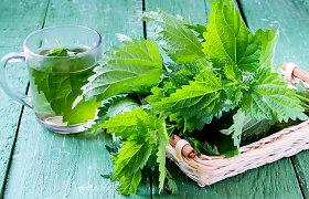 Žoliautojos iš Musteikos kaimo patarimai: kokių vitaminų šaltinių galima rasti bundančioje gamtoje?