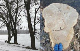 Ir vėl kivirčas dėl medžių: gyventojai skundžiasi dėl iškirstų tuopų, seniūnas tikina, kad jos kėlė grėsmę