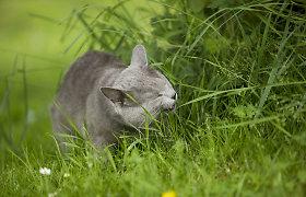 Gydytojas J.Kantoravičius: dažniausiai katės apsinuodija šeimininkėms dovanotomis gėlėmis