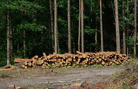 Miškų naikinimas aštrina kontaktą su virusais: kaltas žmogus ar šikšnosparniai?
