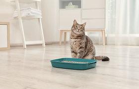 Situacija – katė šlapinasi ne dėžutėje: ką daryti?