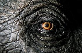 Kai pasaulio gyvūnai telpa 2500 kvadratinių metrų – žvilgsnis į atsinaujinusio T.Ivanausko muziejaus ekspozicijas ir užkulisius