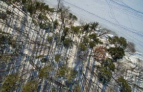 Medkirčiai traukiasi iš valstybinio miško