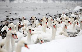 Aplinkos apsaugos departamentas: atšalus orams nepamirškime padėti ir laukiniams gyvūnams