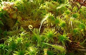 Vabzdžiaėdžiai augalai