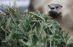 Saugomų gyvūnų ir augalų sąrašas – trumpesnis