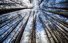 Testas: kaip gerai žinote Lietuvos gamtos rekordus – didžiausią ežerą, aukščiausią medį ir t.t.?
