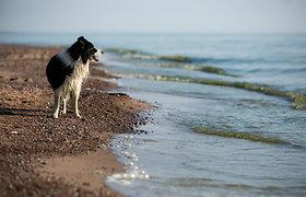 Šunų paplūdimys Nemirsetoje