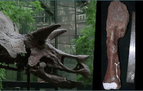 Paaiškėjo, kad vėžiu sirgo ir dinozaurai – mokslininkai aptiko pirmąjį šios ligos atvejį dinozauro kaule