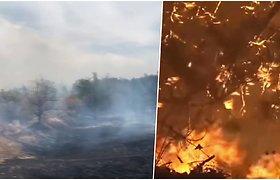 Ukrainos Luhansko srityje dėl neaiškios priežasties įsiplieskė miškų gaisrai – daugėja aukų