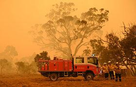 Dėl Australijoje siautusių gaisrų žuvo arba buvo perkelti beveik trys milijardai gyvūnų