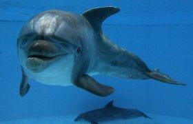 Delfinai gali išlikti budrūs dvi savaites