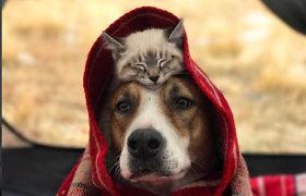 """Kartu keliaujantys šuo ir katinas savo draugyste stebina 100 tūkst. """"Instagram"""" gerbėjų"""