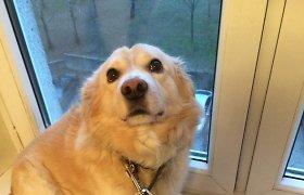 Pašilaičiuose, Vilniuje, dingo šuo