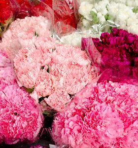 Gėlininkystės ūkių savininkai: gėlių kainos liks pernykštės