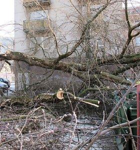 Sekmadienį ugniagesiai 32 kartus tvarkė vėjo išverstus medžius – pirmadienį jo gūsiai tęsiasi