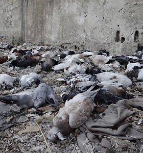 OPCW pradeda tyrimą dėl nutekinto dokumento, susijusio su chemine ataka Sirijos Dumoje