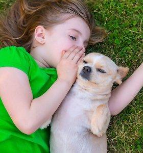 Neleiskite šuns prie negyvų paukščių, jų išmatų – jis gali užsikrėsti chlamidijomis