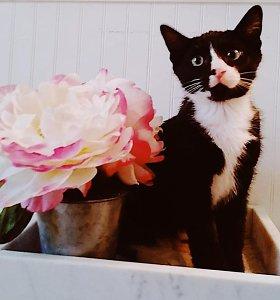 Katinas Feliksas valandą sukosi skalbimo mašinoje: neteko regėjimo, jam sutrenktos smegenys