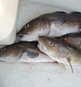 ES ministrai siūlo kitąmet griežtinti menkių žvejybą Baltijos jūroje
