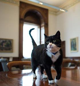 """Britanijos URM """"vyriausiasis peliautojas"""" katinas Palmerstonas išeina į užtarnautą poilsį"""