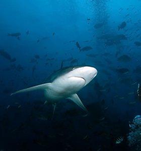 Paprastas būdas išgelbėti ryklius nuo žūties tinkluose – keli pigūs magnetai